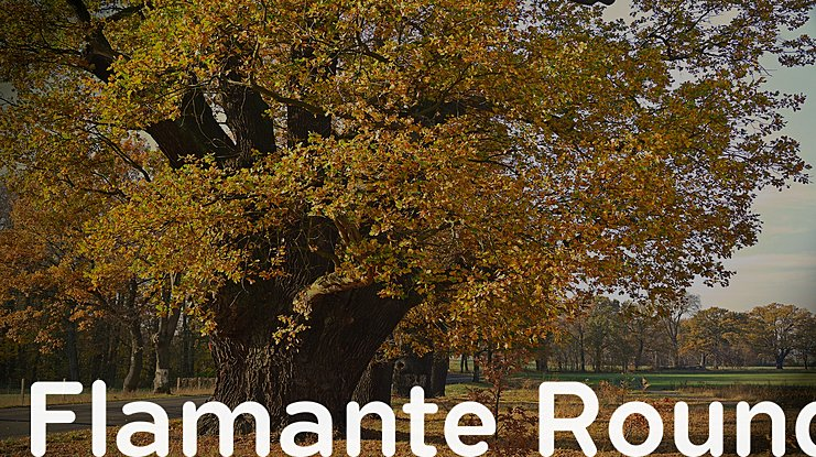 Flamante Round Font Family