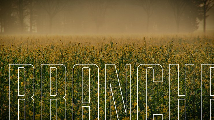 BRANCHE Font Family
