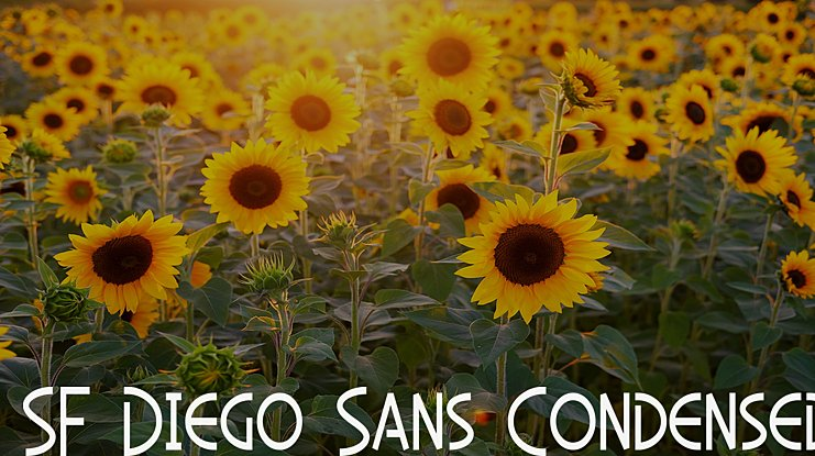 SF Diego Sans Condensed Font Family