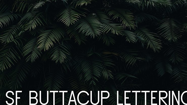 SF Buttacup Lettering Font Family